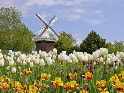 Netherlands-Flowers