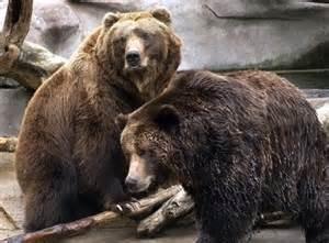 john ball bears