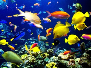 ocean-life-beautiful-pictures-27115568-1600-1200